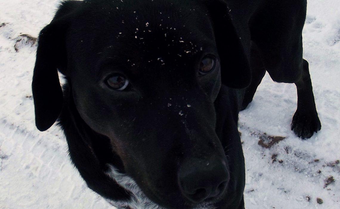 szukanie zaginionego psa